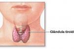 glandulas-de-tiroides