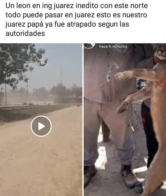 Puma Juarez 2